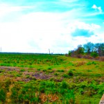 BTN Panaramic View